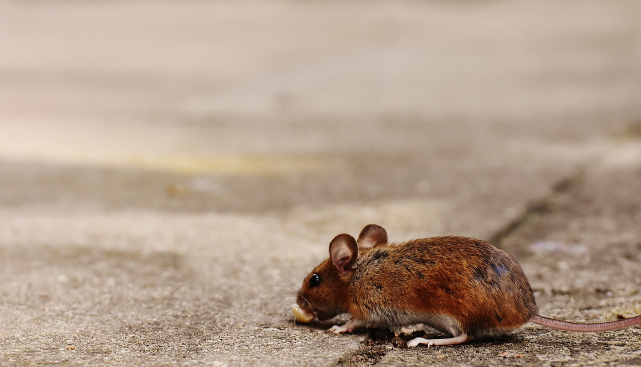 mouse-1708360_1280